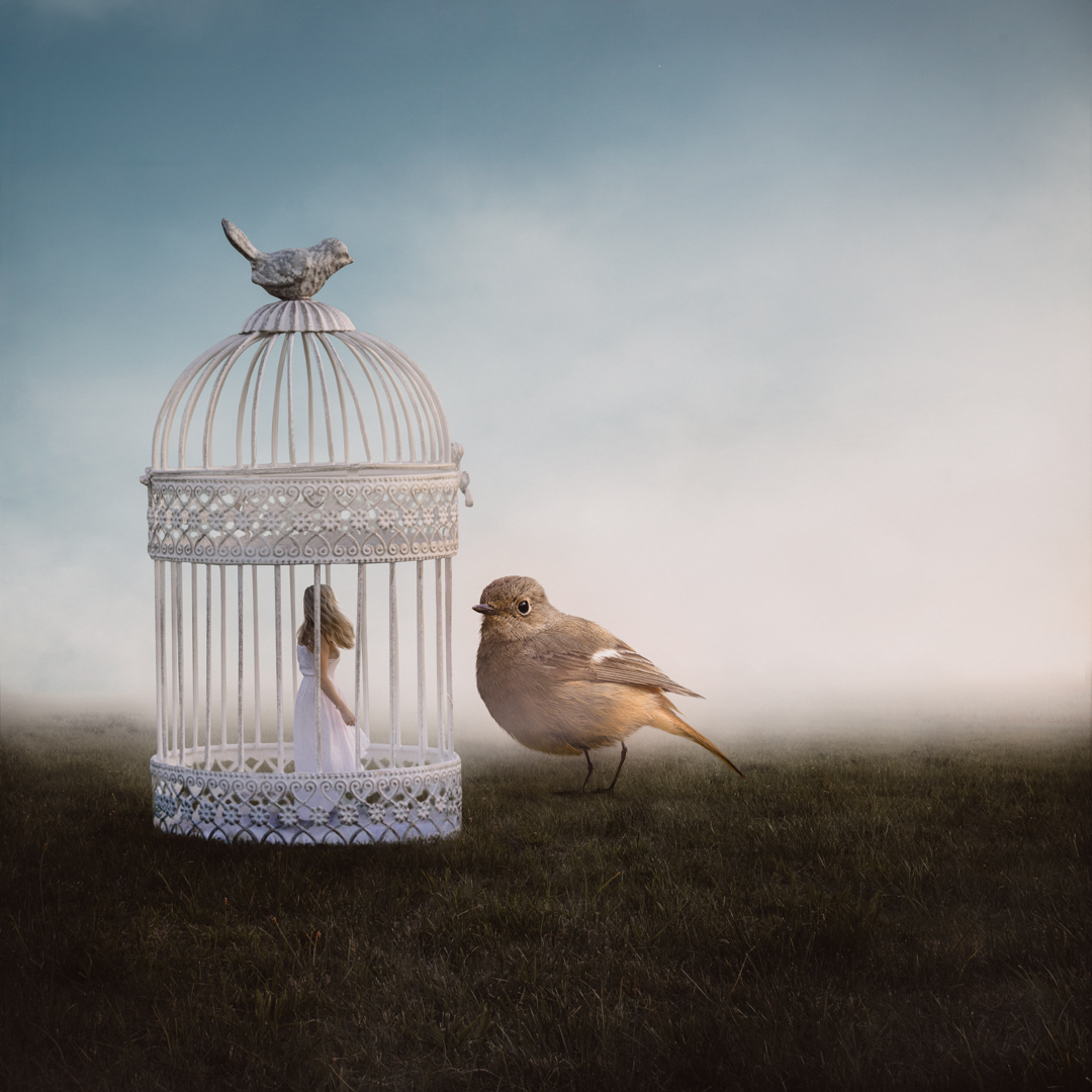 Bird and the Birdcage.jpg