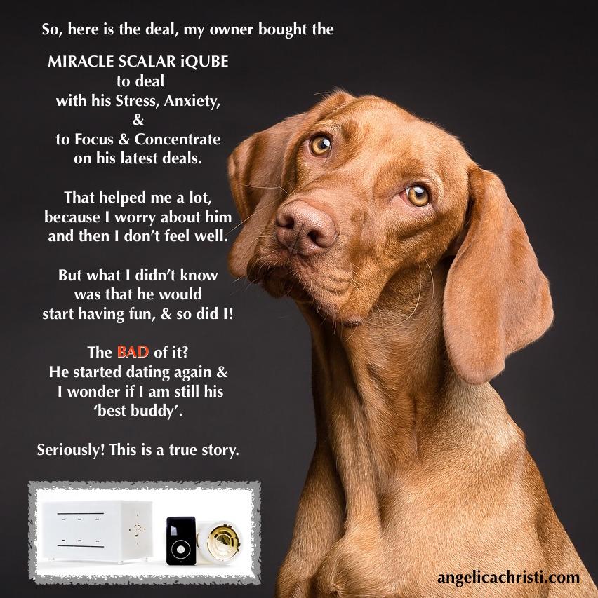 Miracle dog- copy.jpg
