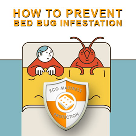 How to Prevent Bed Bugs.jpg