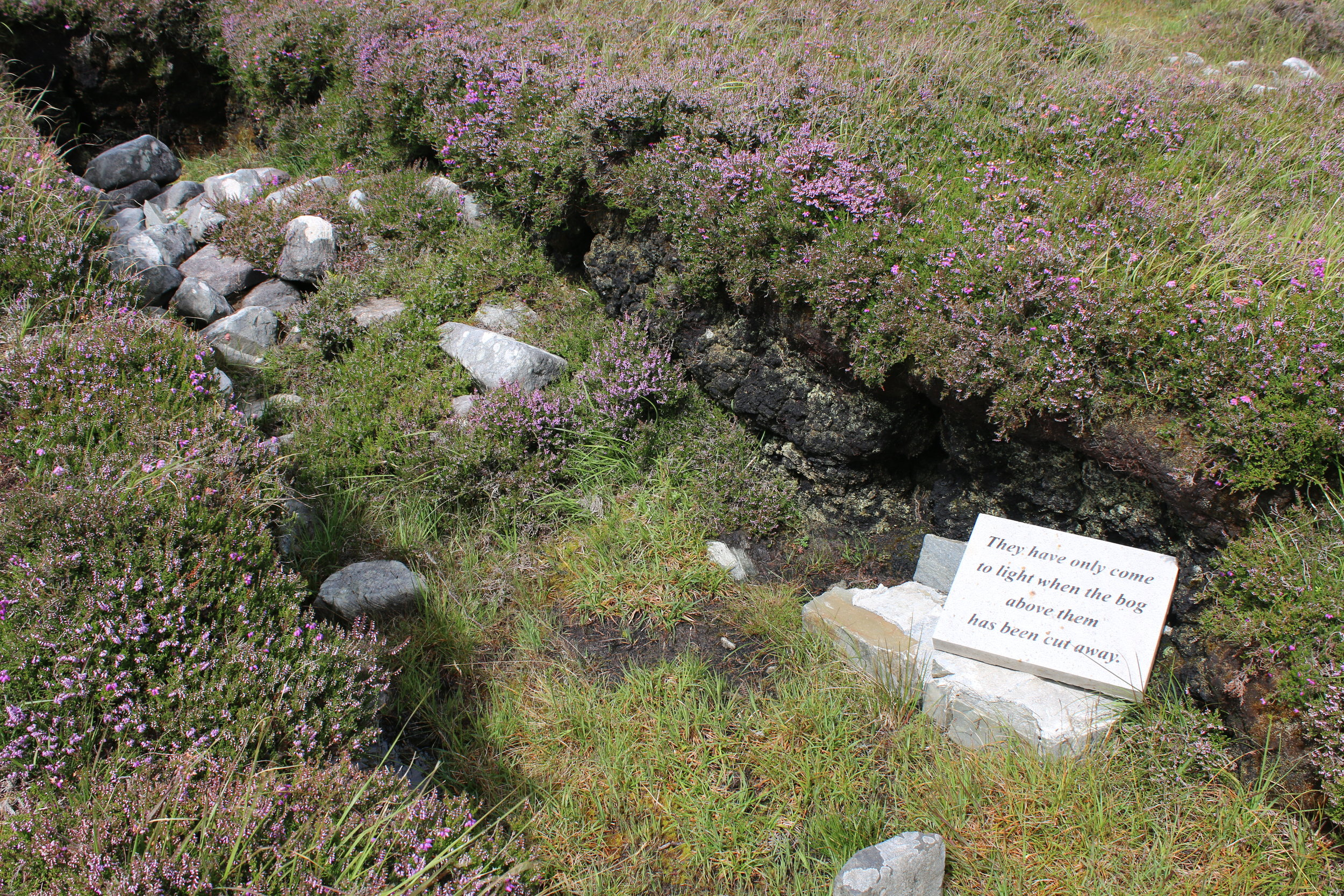 The fact that the ancient stonewall was buried by a bog that took thousands of years to form, speaks to its antiquity.
