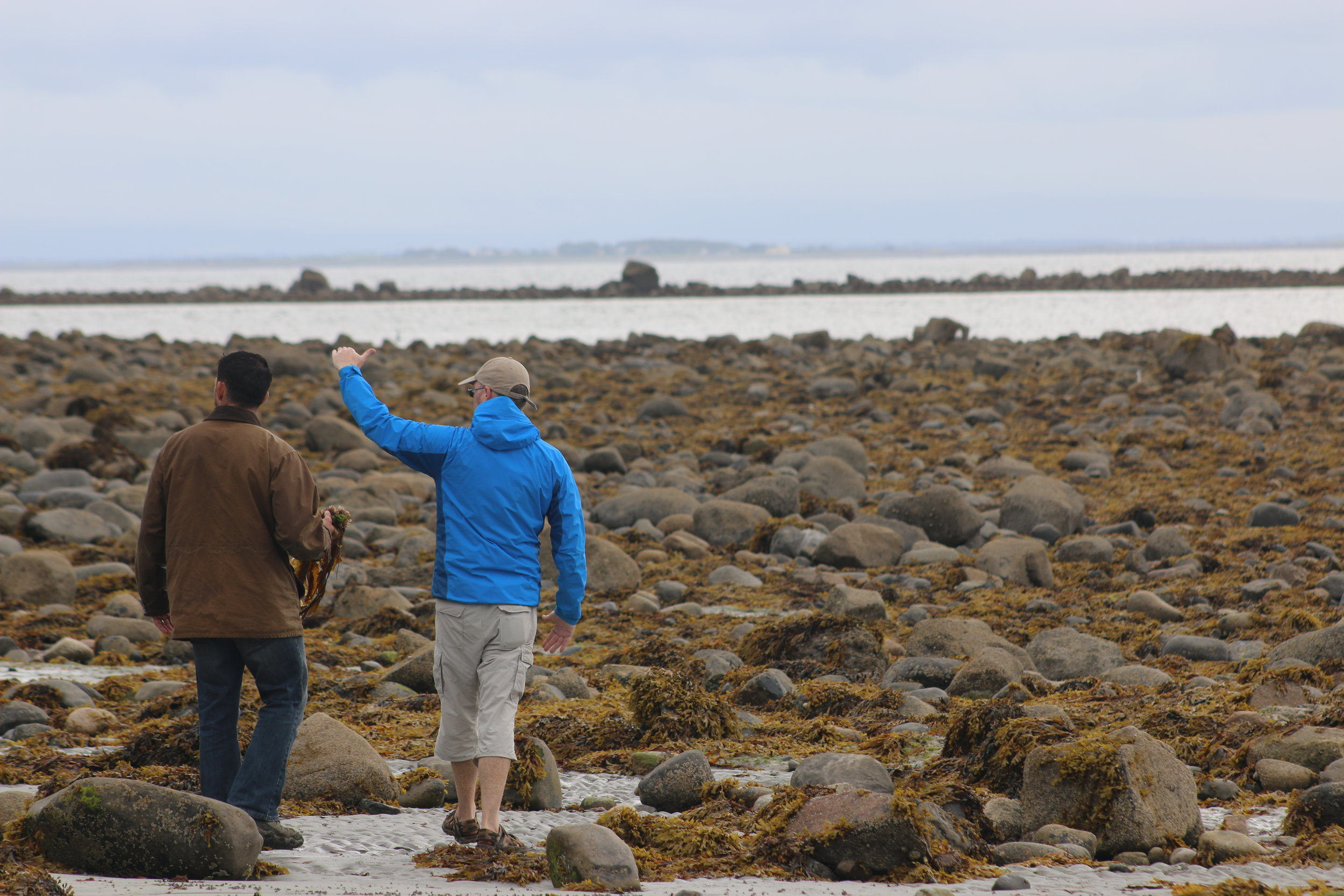 - I took the entire family to meet with forager, Brian Gannon, at the Silver Strand Beach in County Galway.