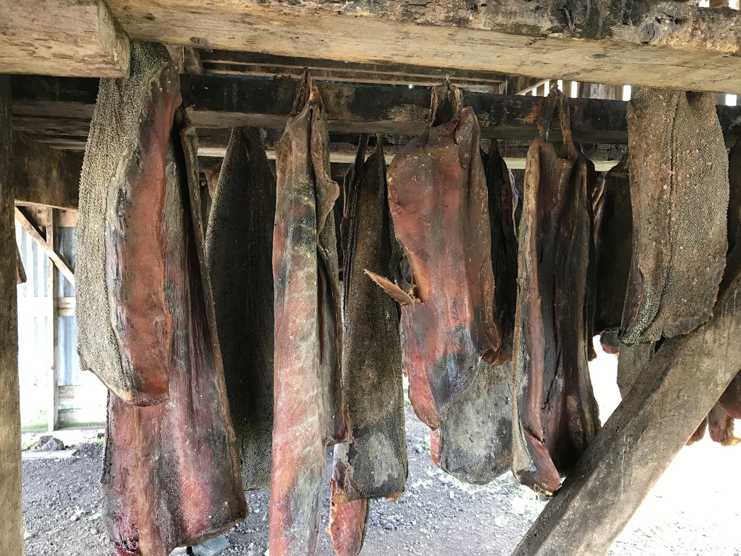 Drying shark