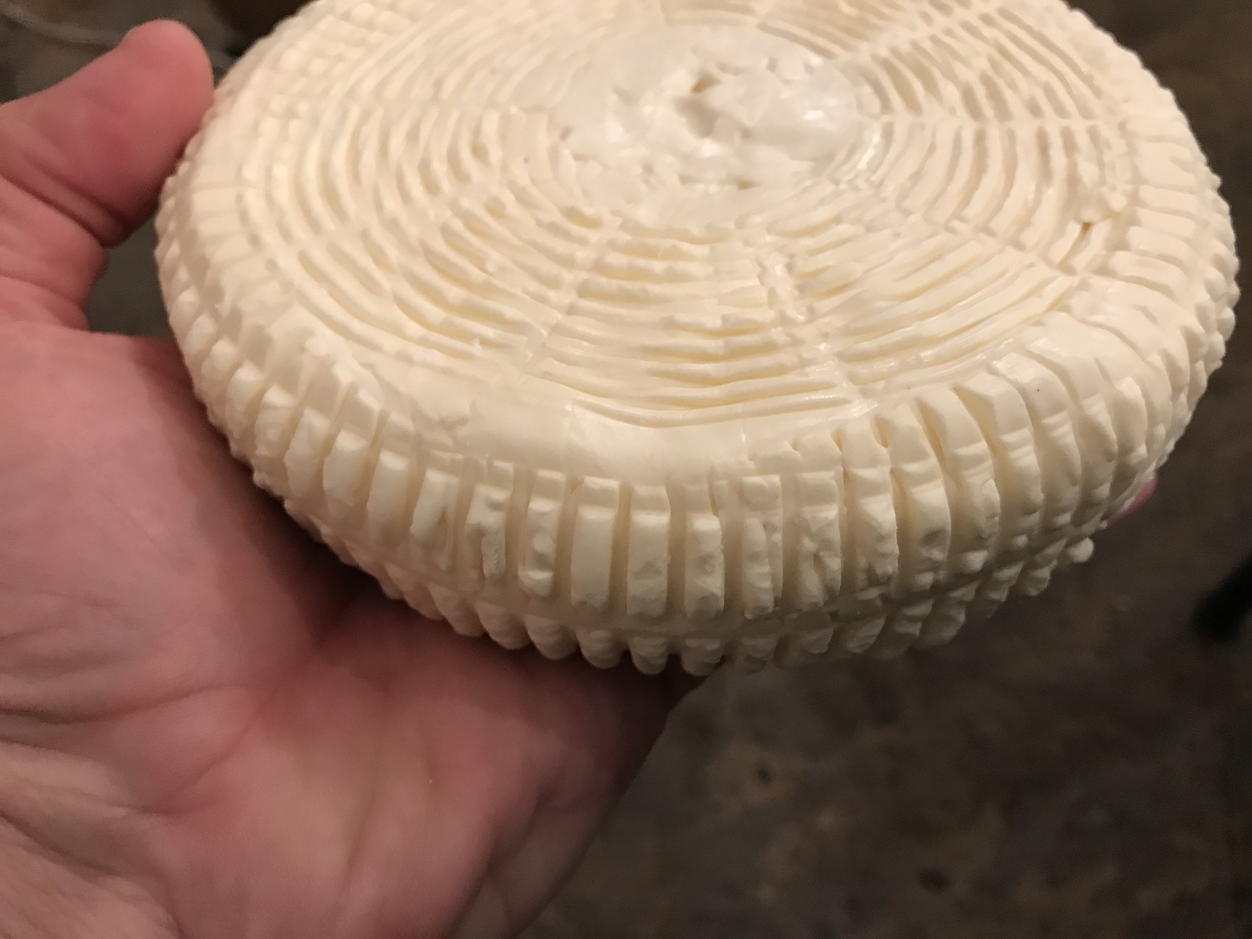 The camembert is ready to put into the curing box