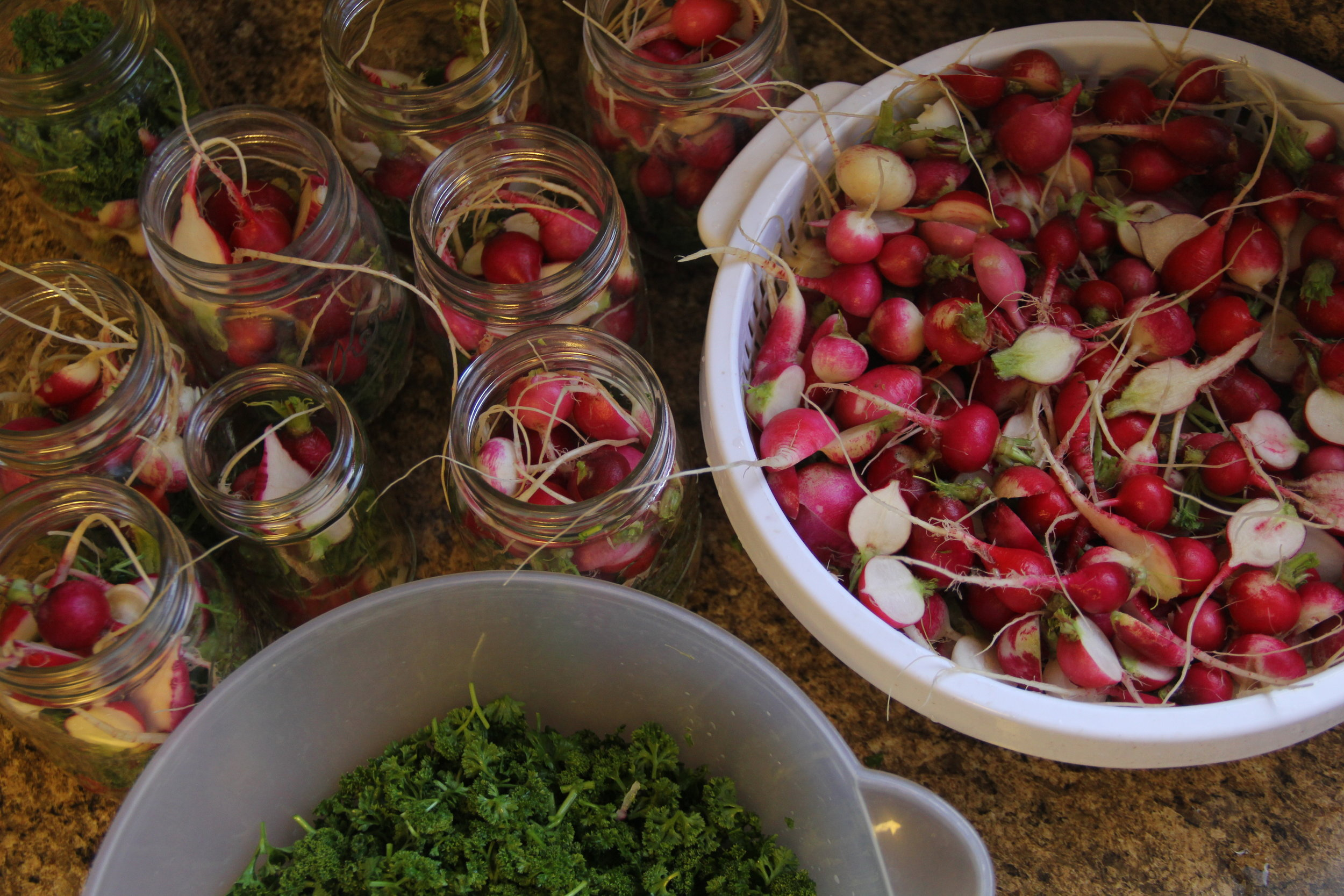 pickled radishes are a real hit with market customers