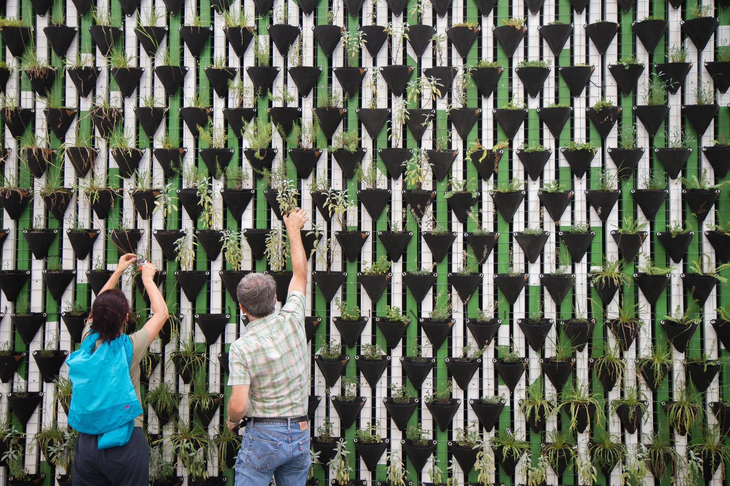 Build a public herb garden in the CBD -