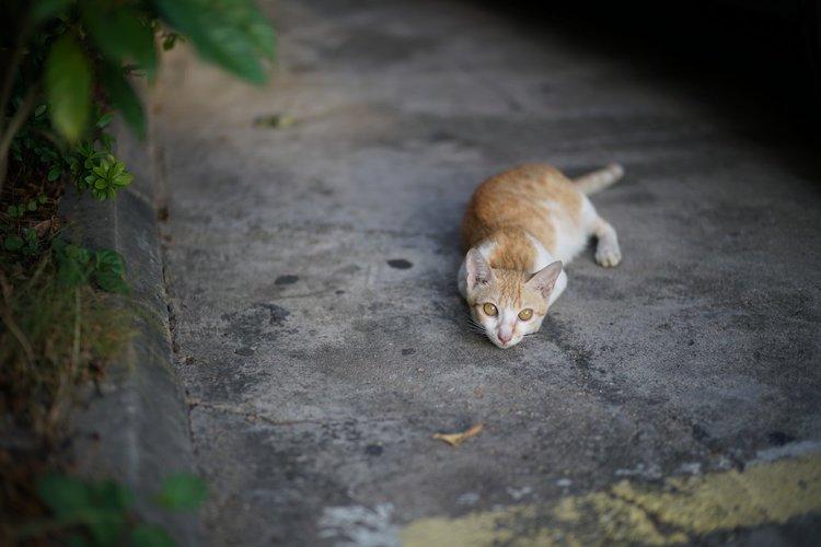 cute-cat-photo.jpg