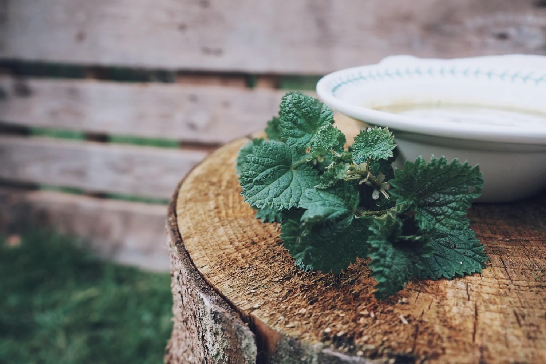 nettle-soup-recipe.jpg