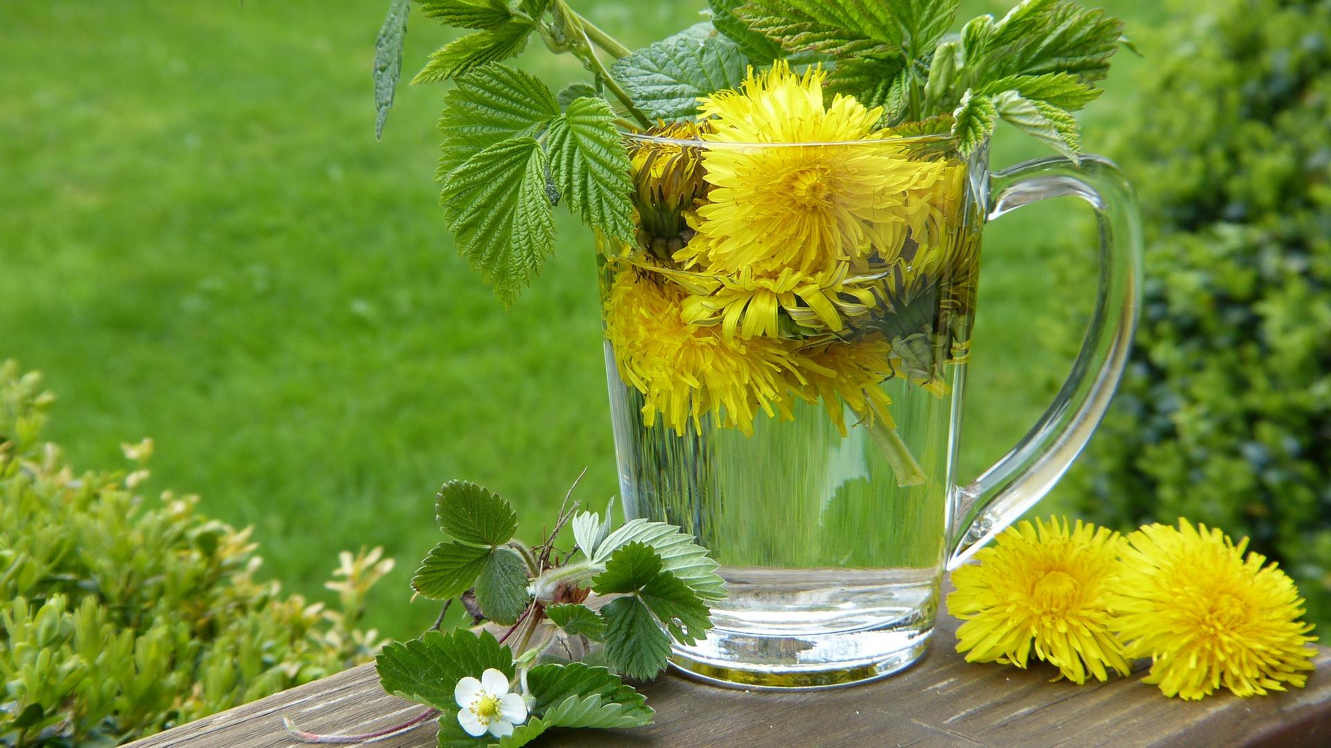 Voikukka on voimakasvi, joka tukee myös keväistä puhdistumista puhdistamalla maksaa ja tehostamalla sen toimintaa.