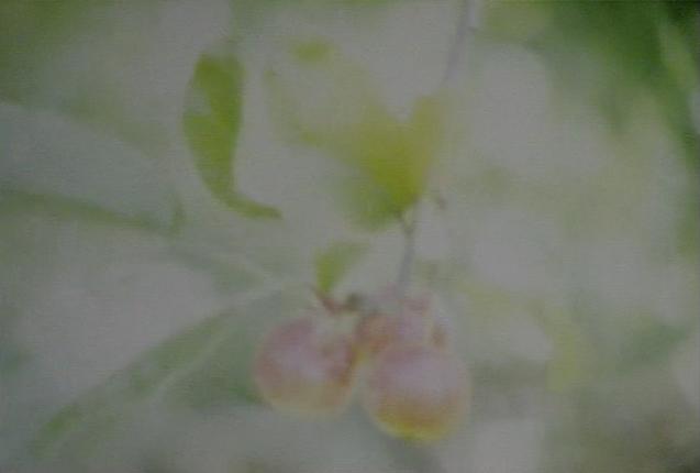 Orchard Revisited / 2010 / 4mins / colour + B&W / sound / super 8mm