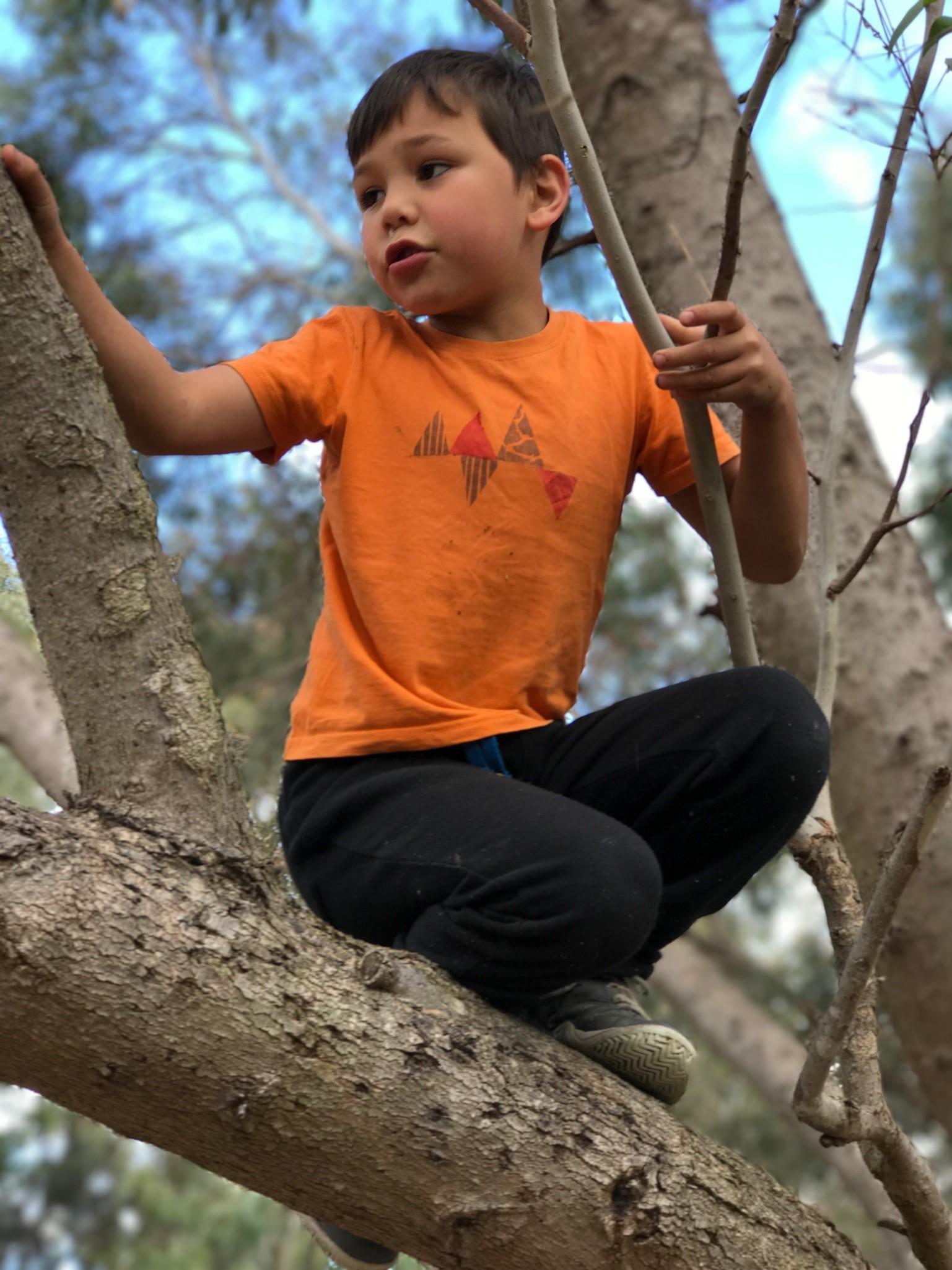 Alfie-climb-tree.jpg
