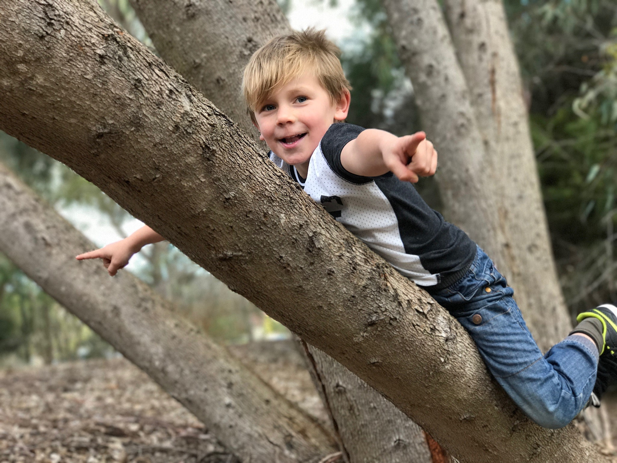 jasper-in-tree.jpg