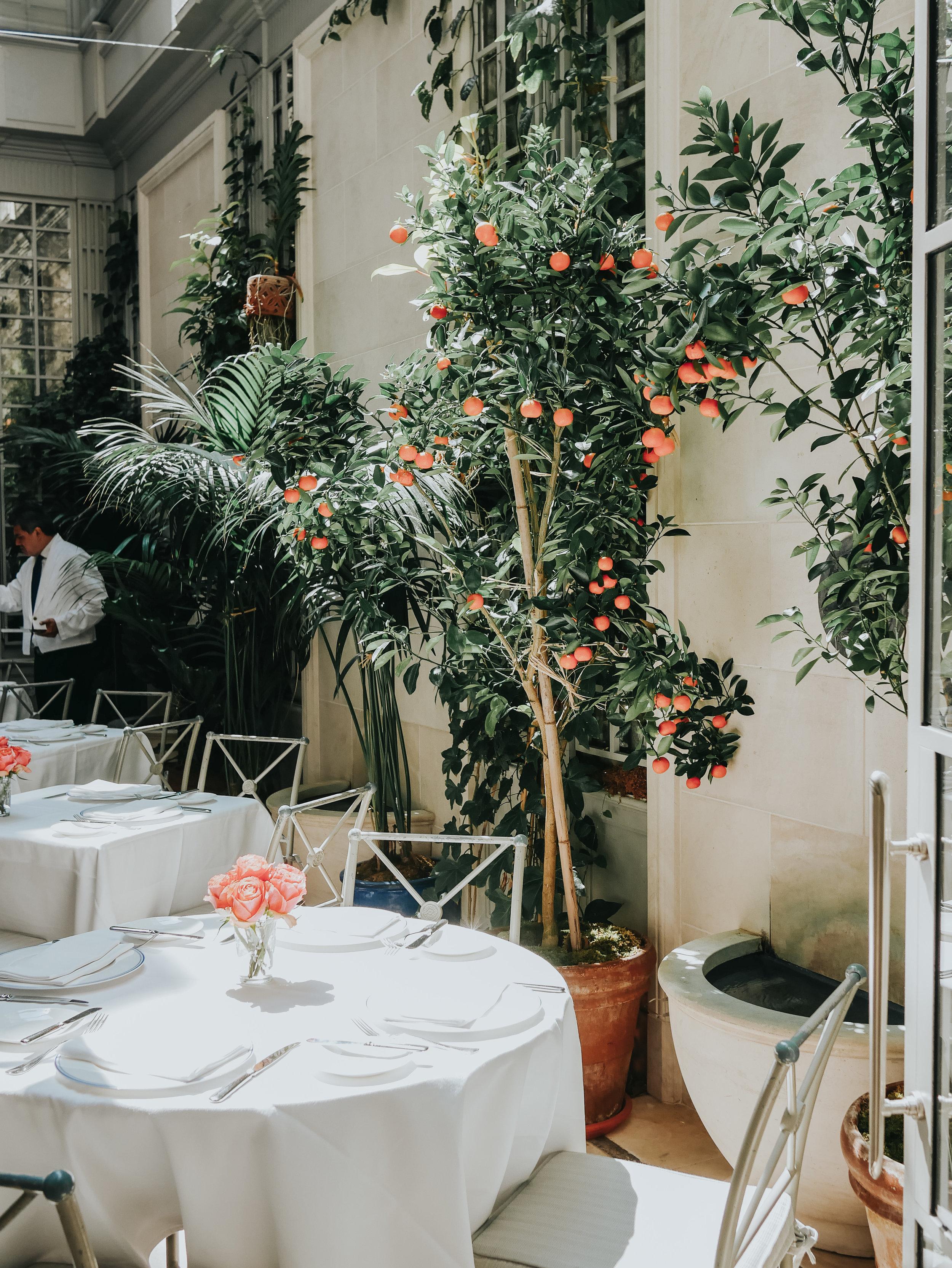 The skylight terrace of the hotel's French-Moroccan haute cuisine restaurant, Majorelle.