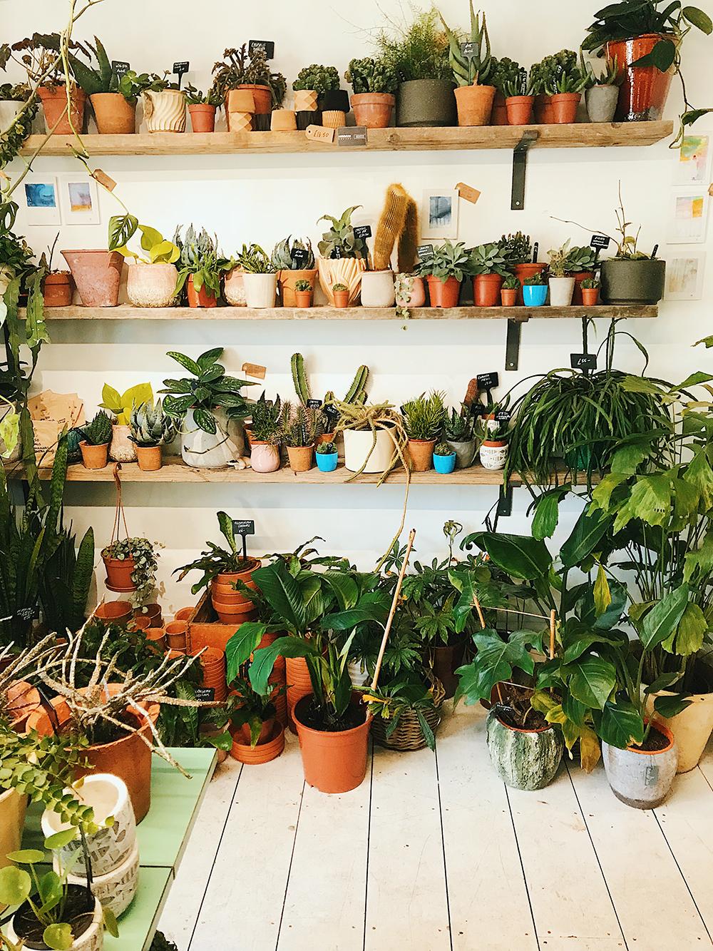 Spider Plant Brighton.jpg