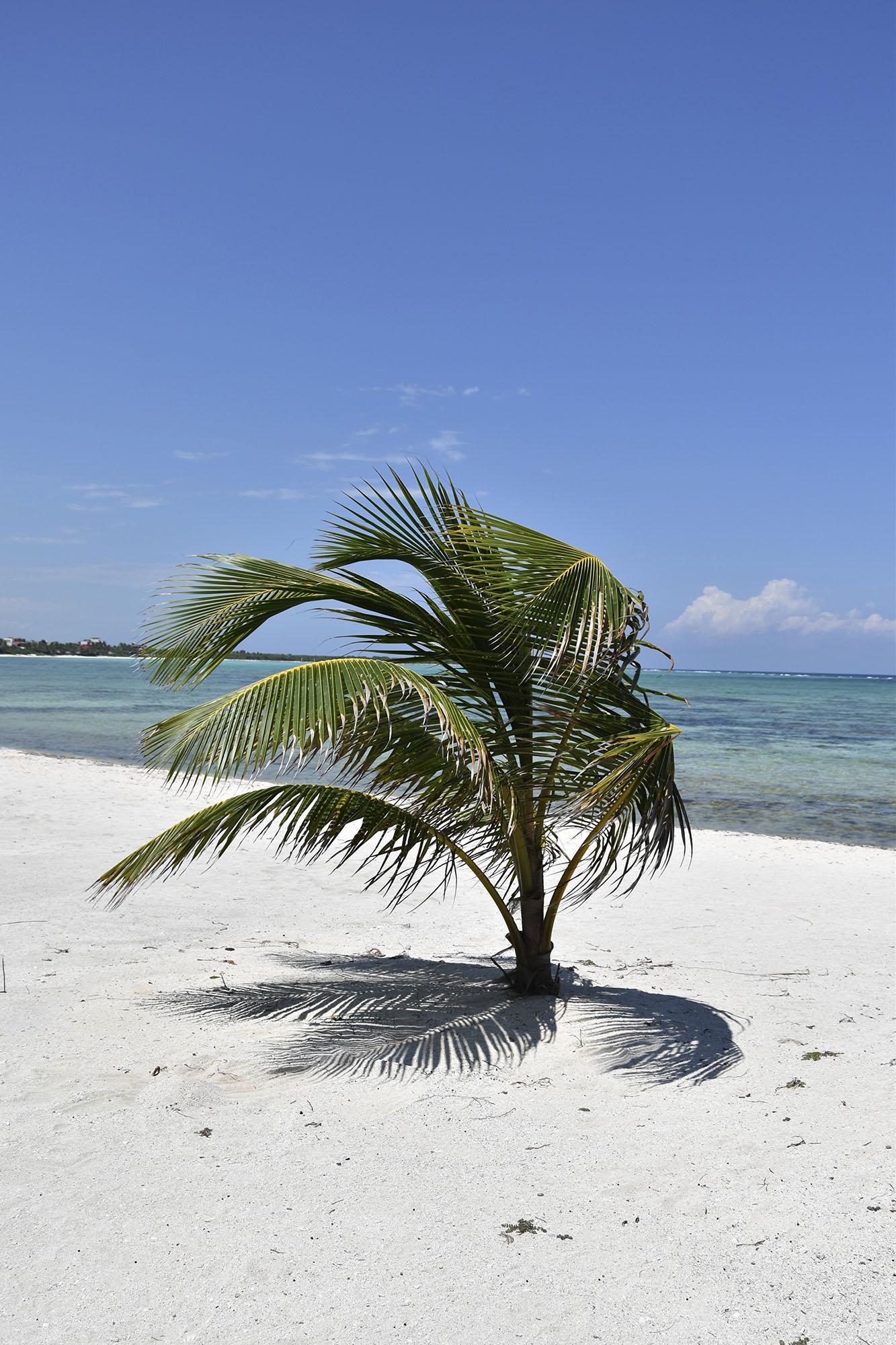 windy-tulum-mexico-palm