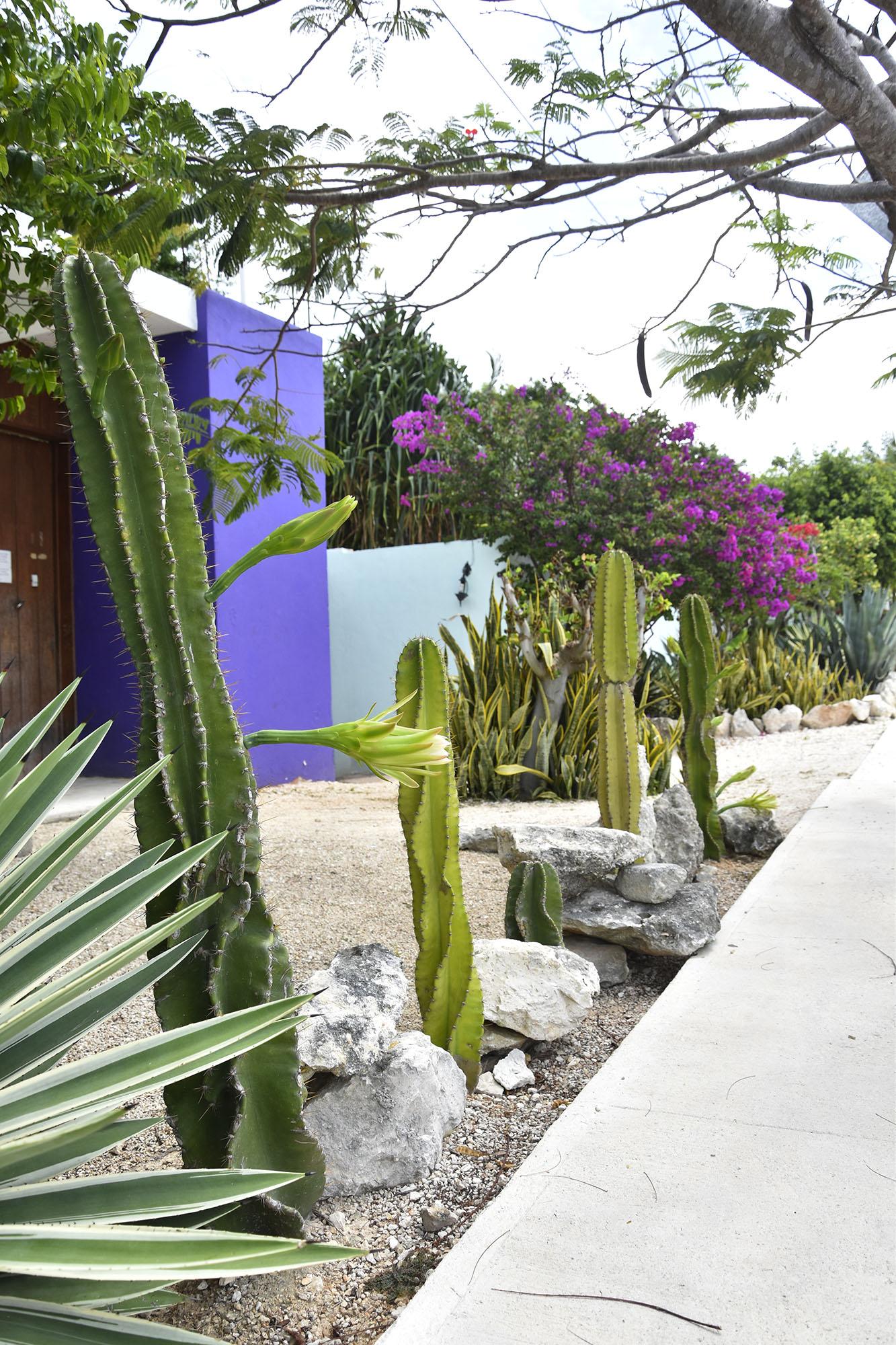mexico-cactus-pink-tropical