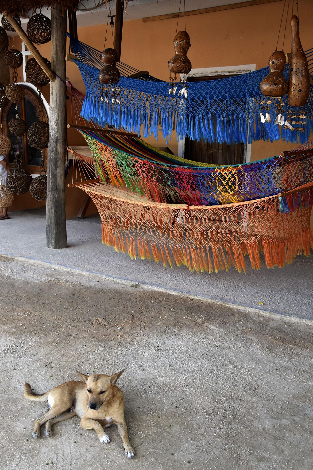 Mexican-hammocks-dog