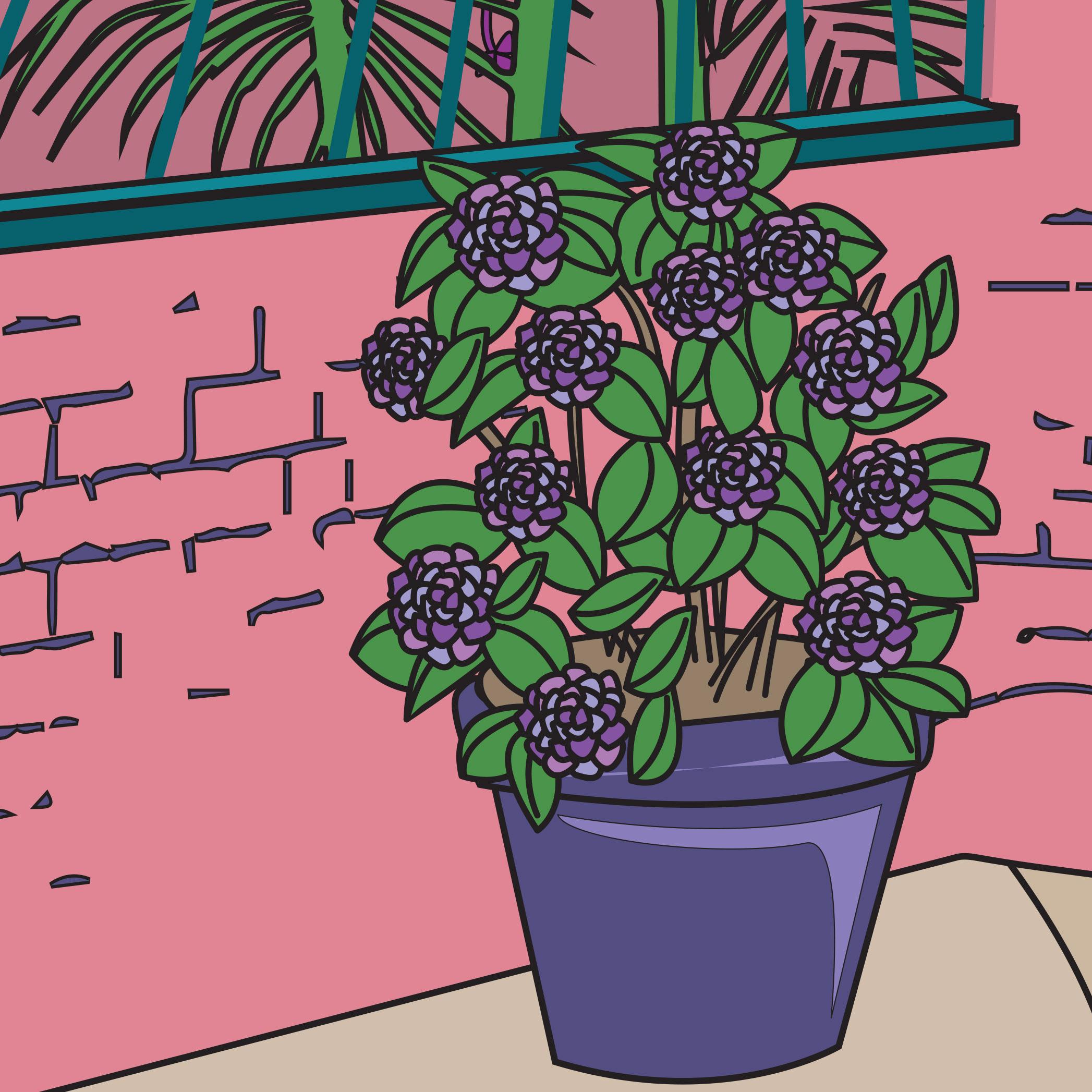 hydrangea-illustration-art-commisssion