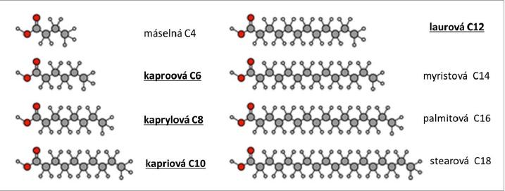 Obrázek 2 Mastné kyseliny tvořící MCT (řetězec C6-C12, tučně a podtržené)