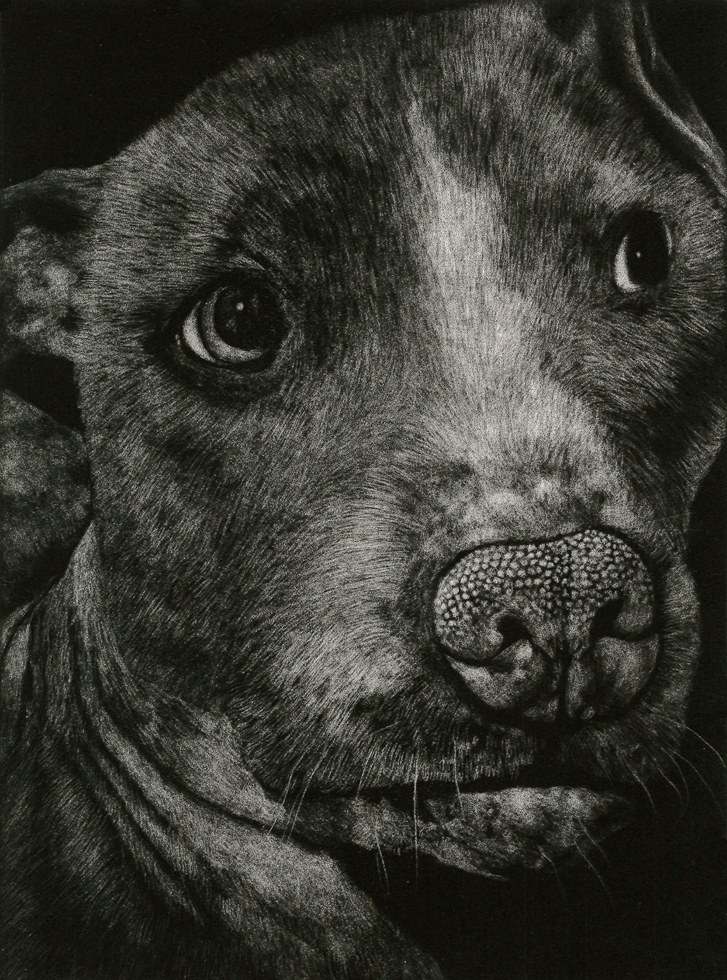 Kirsten Flaherty .  Otis II , 2014. Mezzotint. Sheet: 15 x 11 inches. Edition: 25.