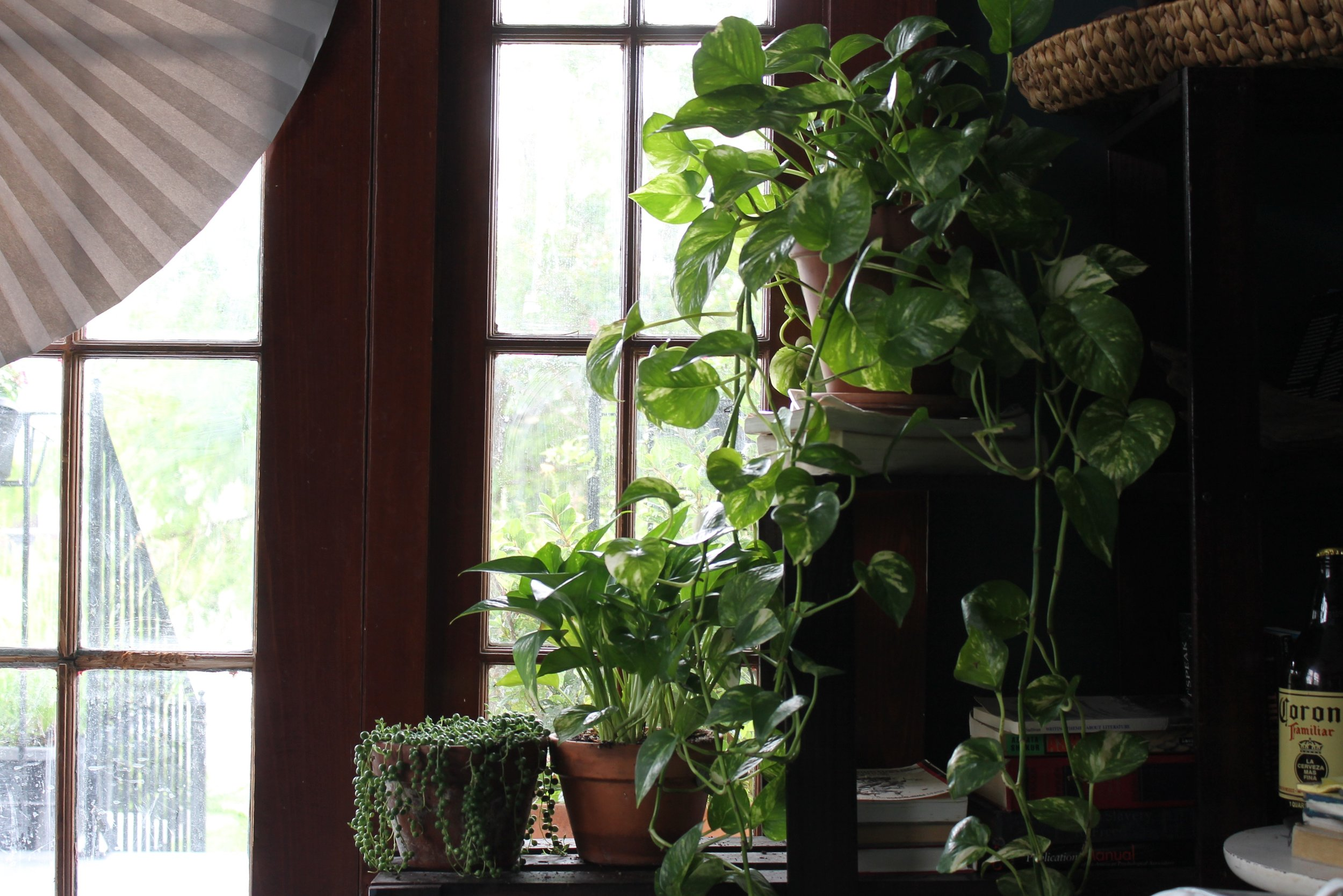 77a8a-blackpeoplewithplants_micheal_collectionofcollectionsblackpeoplewithplants_micheal_collectionofcollections.jpg
