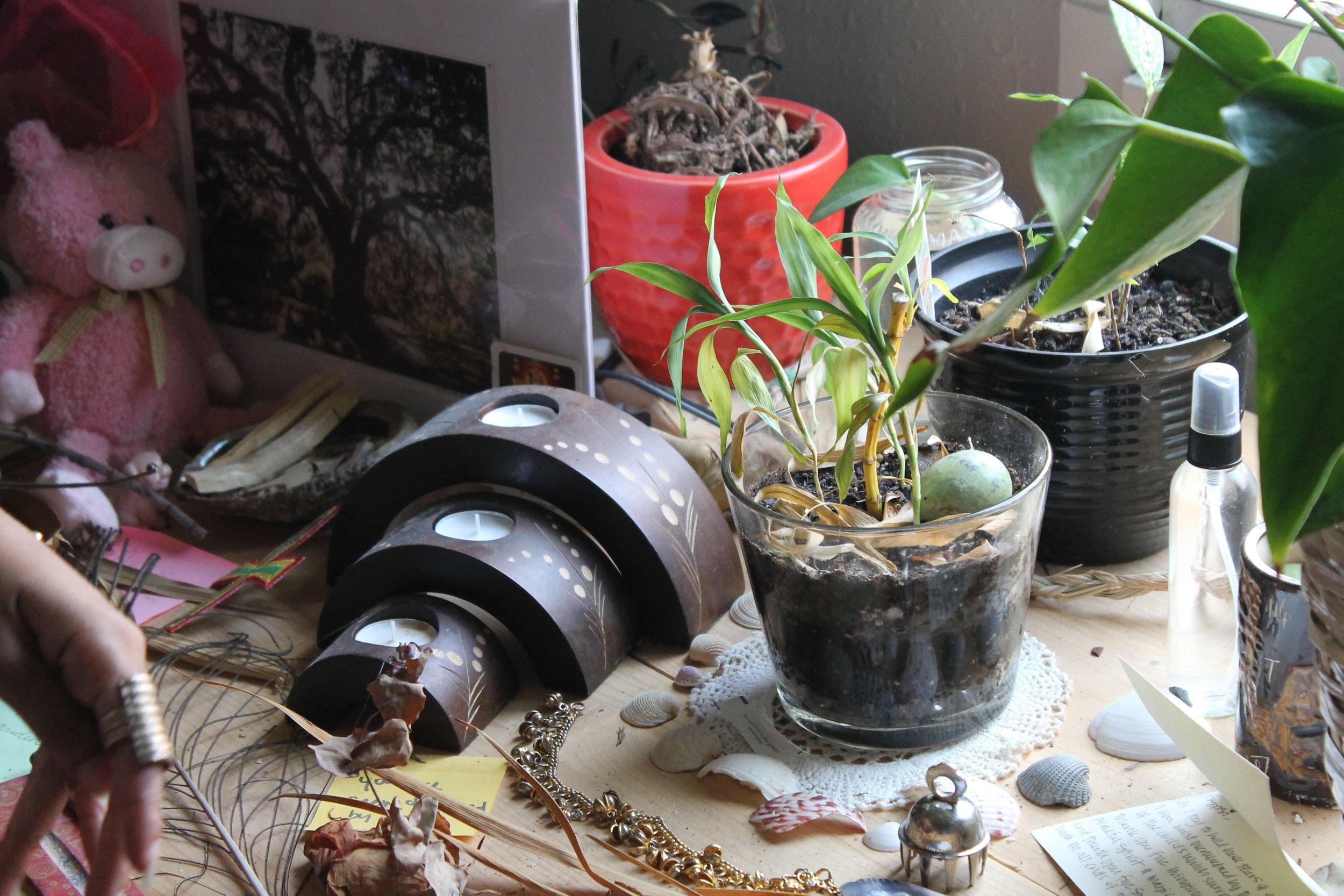 8a842-blackpeoplewithplants_gypsi_collectionofcollectionsblackpeoplewithplants_gypsi_collectionofcollections.jpg
