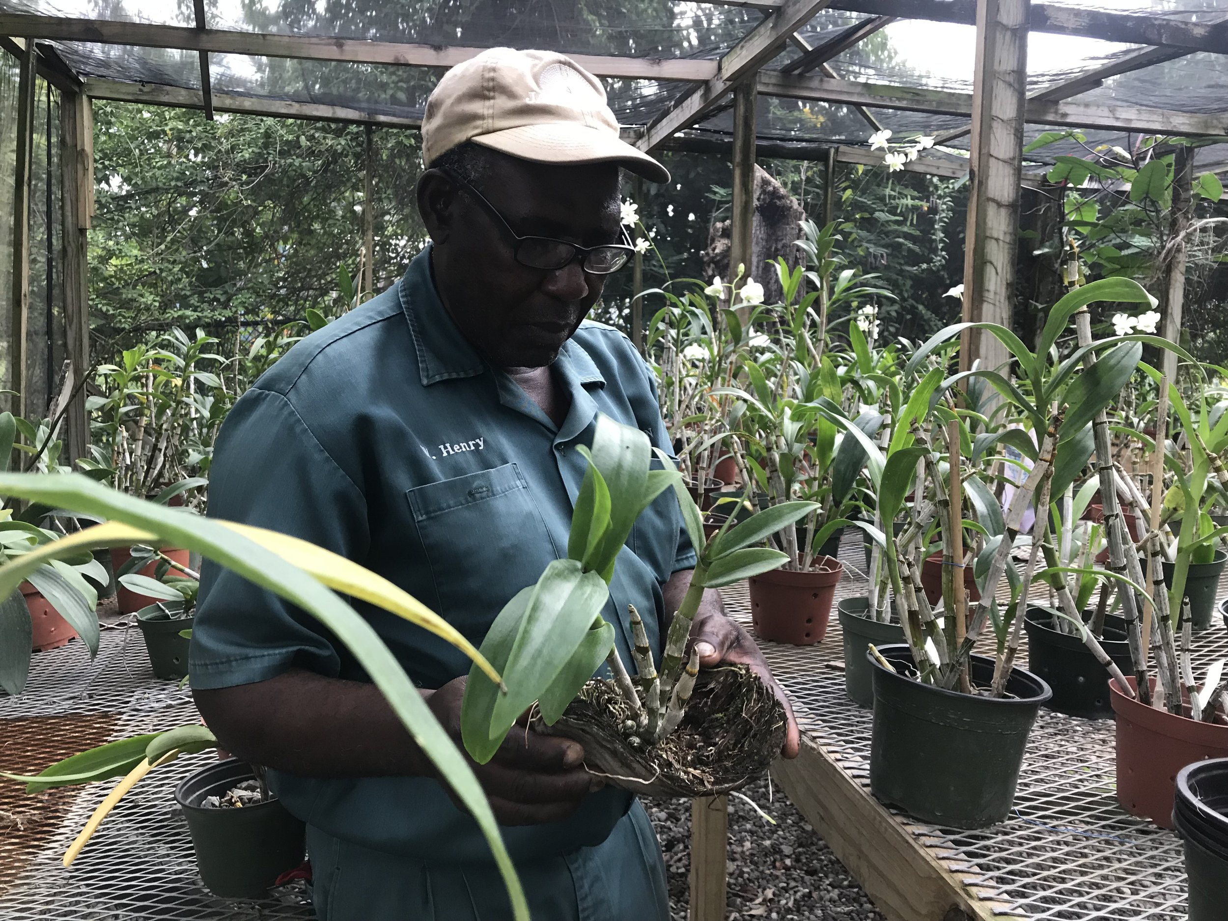 Jamaica Inn_Black People with Plants_Collection of Collections.jpg