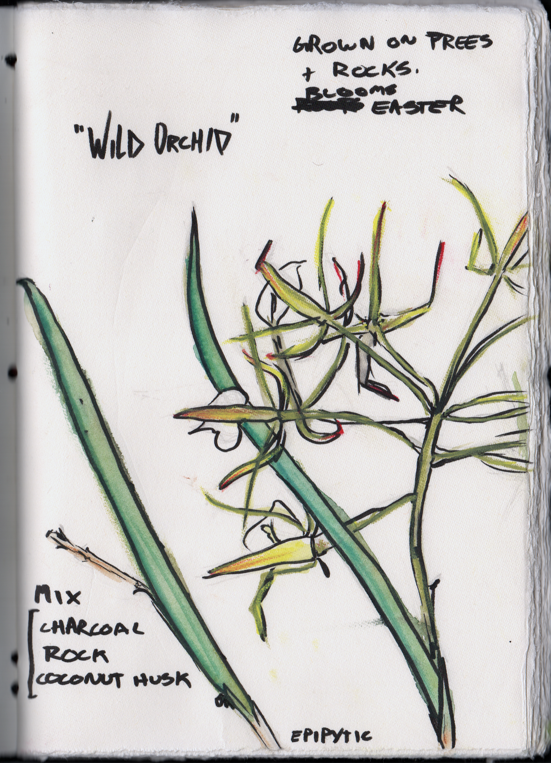 Wild orchid illustration by Jeremy using watercolor and pen.