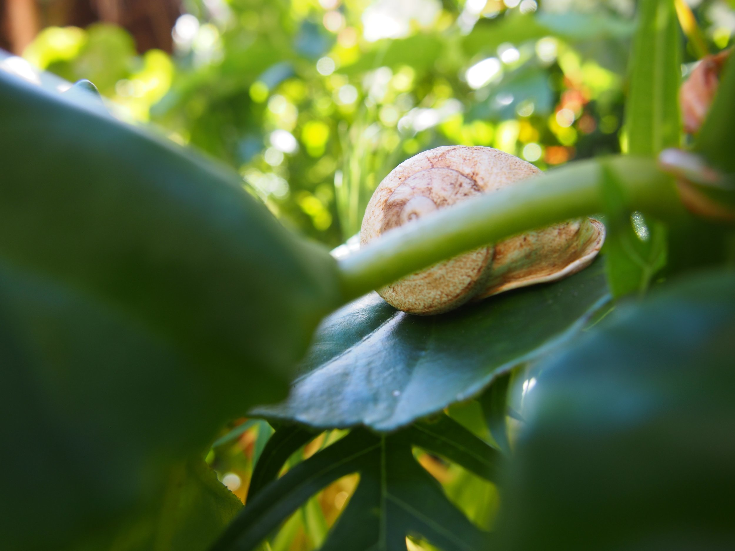 A snail's journey across a leaf.
