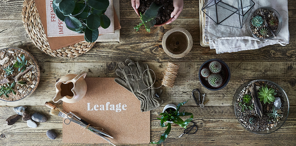 Leafage Succulent Cactus Collection