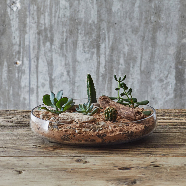Weekend Workshops - Sign up and turn up to our terrarium workshops! That is all you need to do, we will take care of the rest.BOOK NOW >