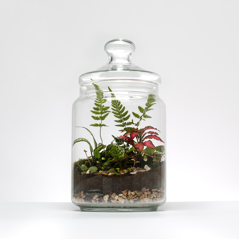 Cookie Jar Terrarium £55