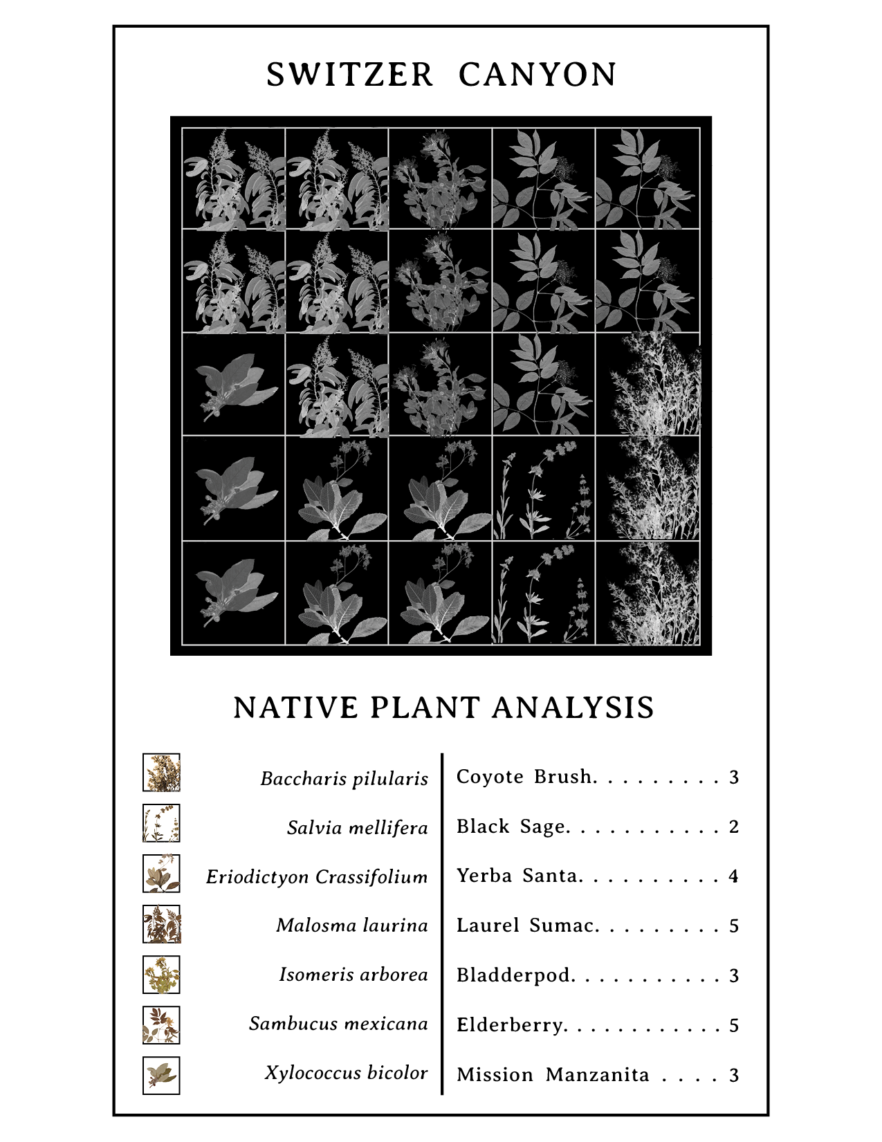 Revised digital images for better cyanotype exposure