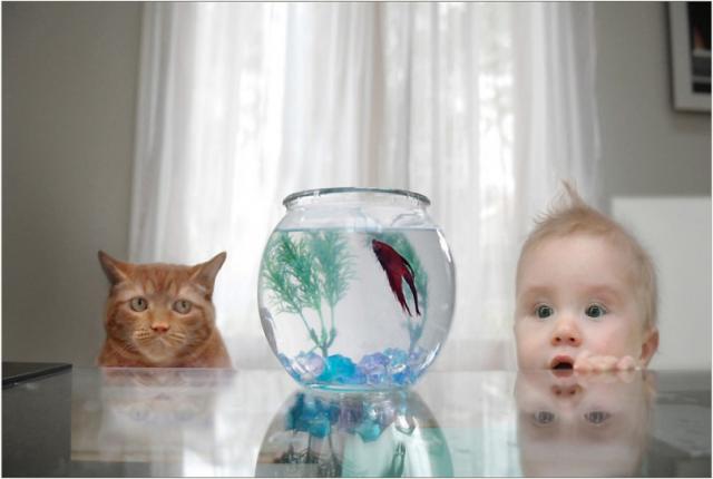 CAT-BABY-GOLDFISH-640x430.png