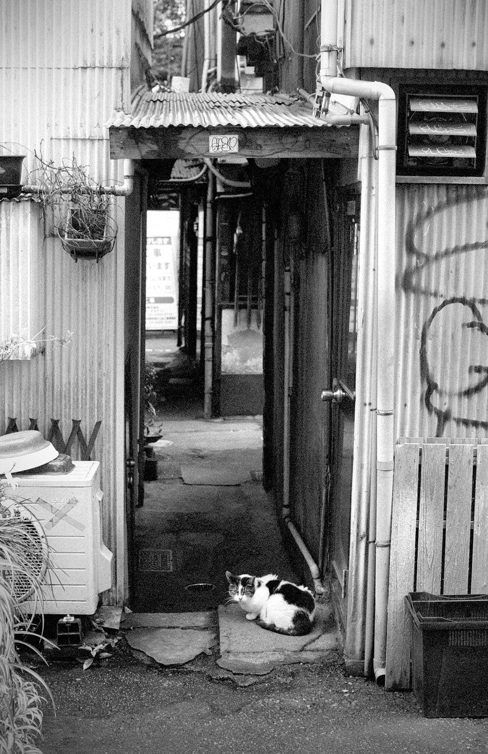 shibuya2.jpg