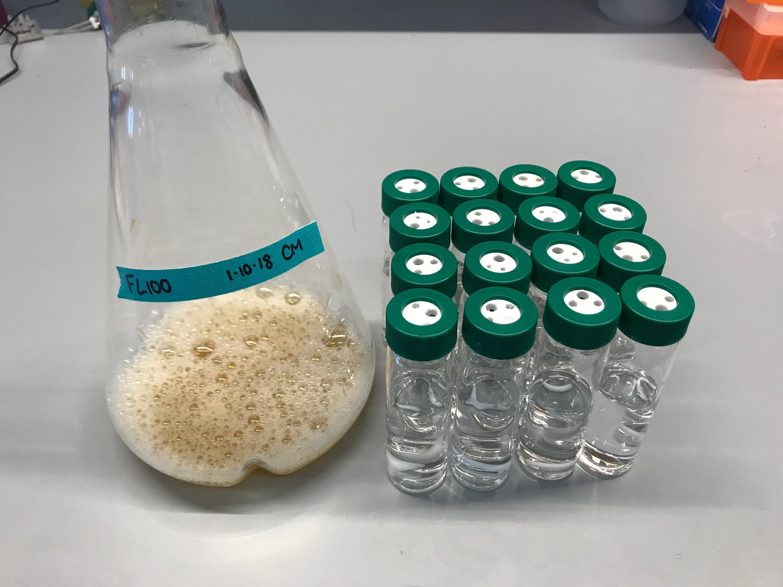 Saturated culture with 16 assembled vials filled with water (20 mL)