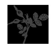 Ingredient-Rosehip-Oil.png