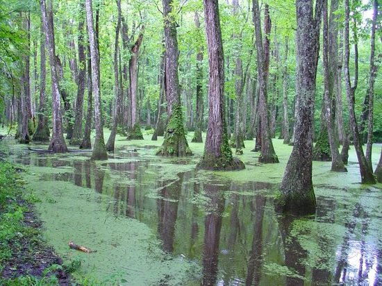 Waters of the U.S. include forested swamps.