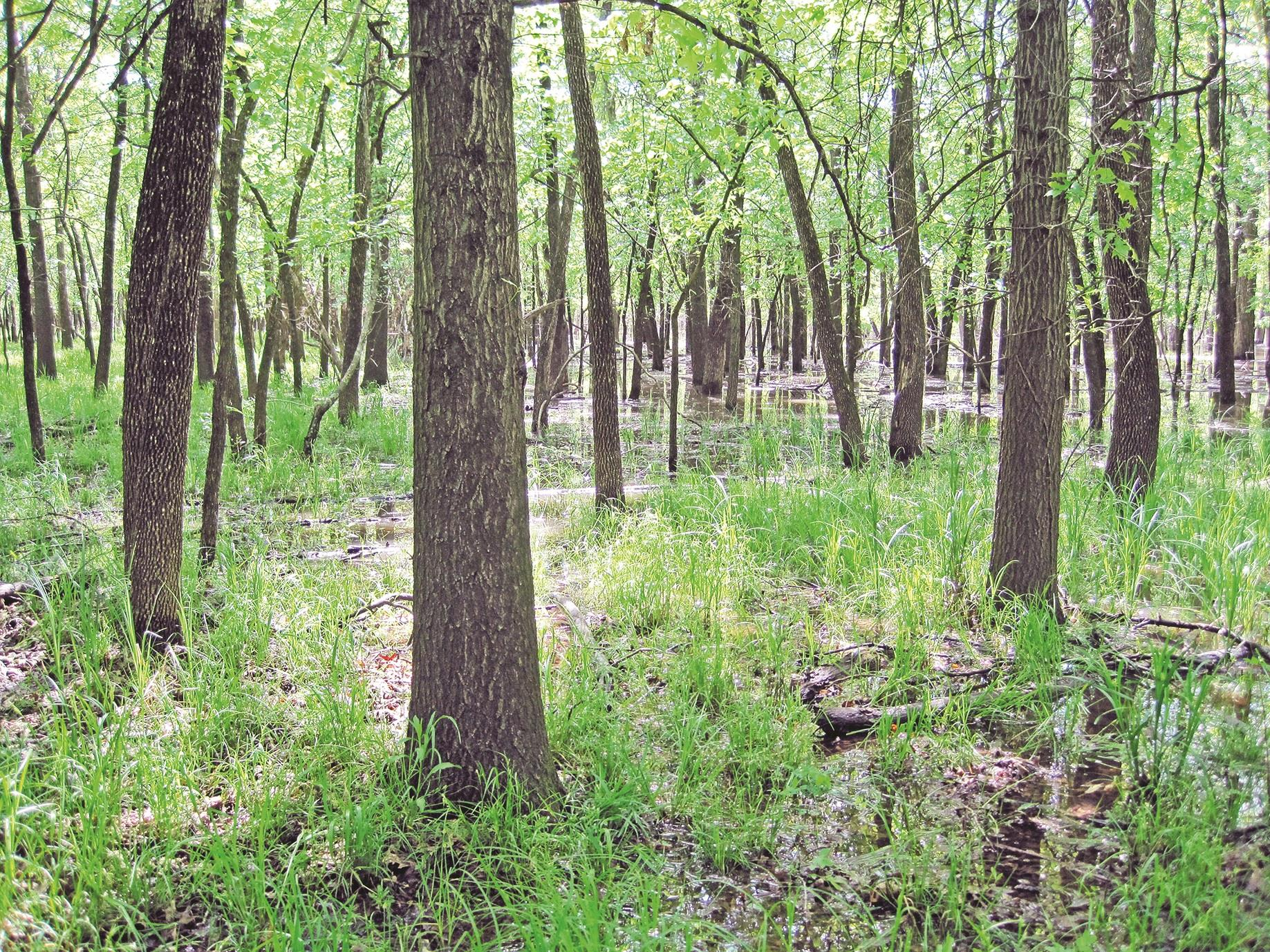 Note: Many bottomland hardwoods in southeast may be jurisdictional Waters of the US.