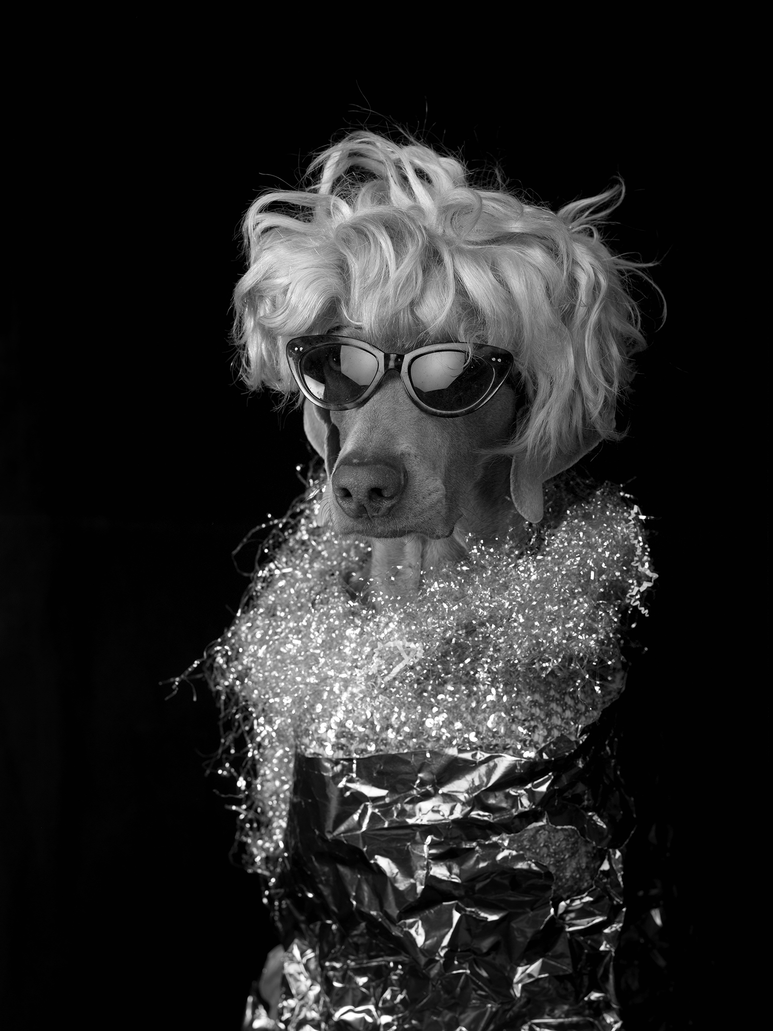 CHER - ON: ALIENS!People are aliens. Dogs are old movie stars.photographWilliam WegmanNEXT >