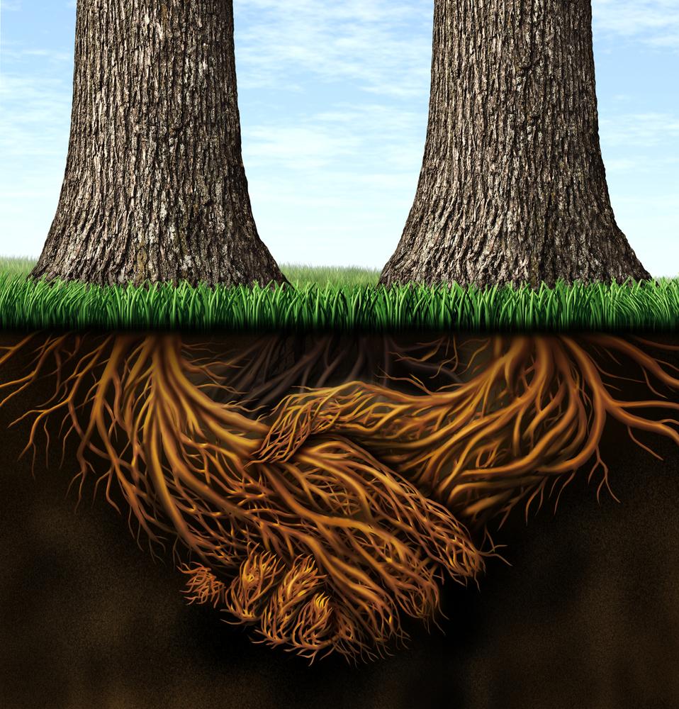 Tree roots merging forces.jpg