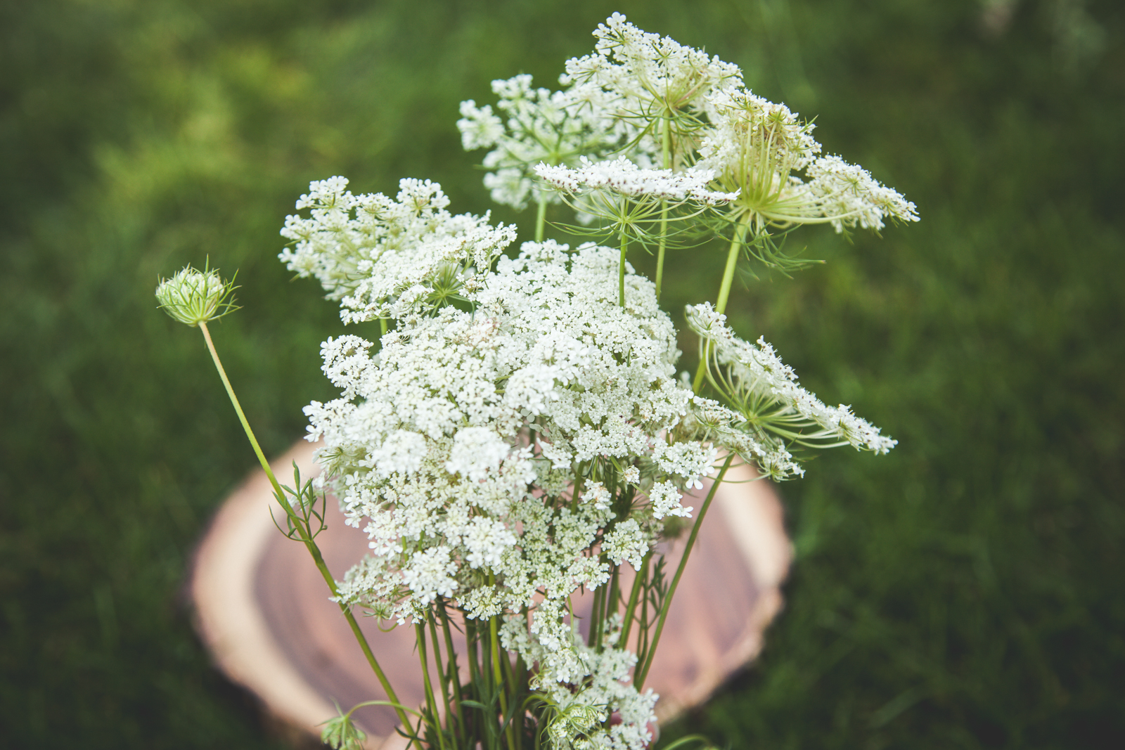 WildflowersPart2-sm-0502.jpg