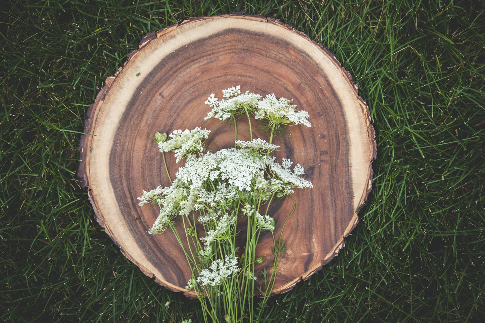 WildflowersPart2-sm-0504.jpg