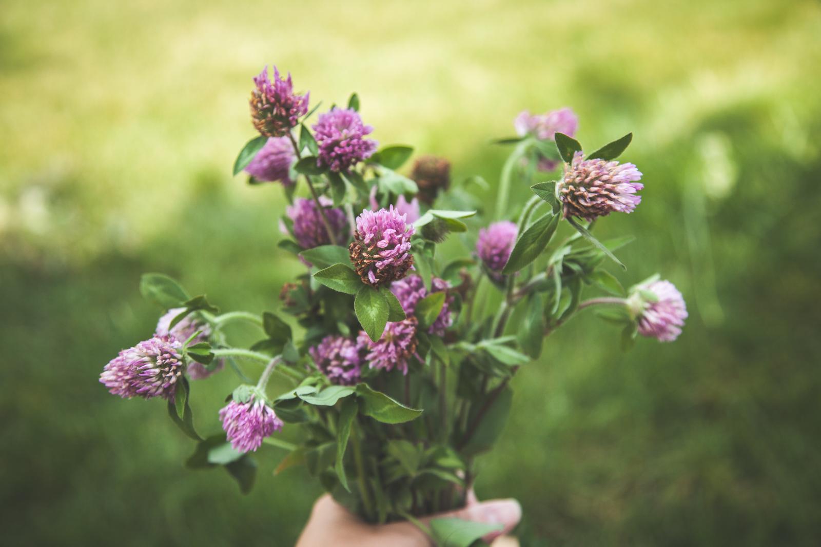 WildflowersPart2-sm-0510.jpg