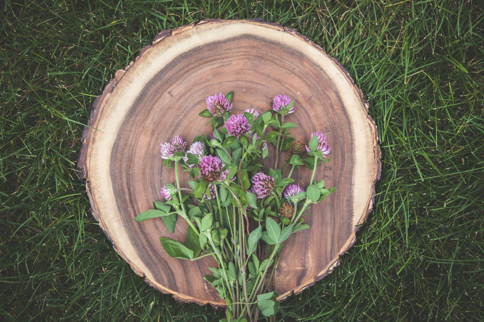WildflowersPart2-sm-0512.jpg