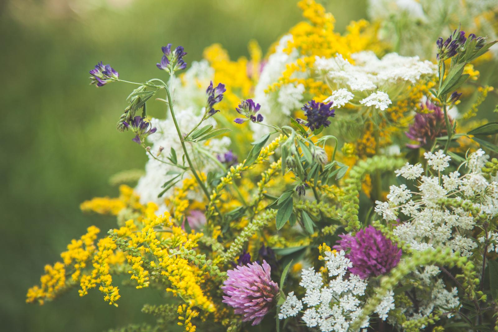 WildflowersPart2-sm-0544.jpg