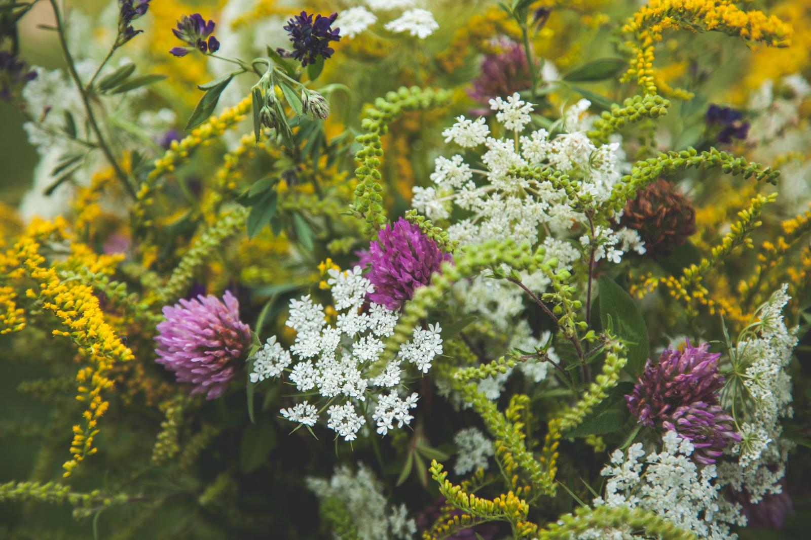 WildflowersPart2-sm-0545.jpg
