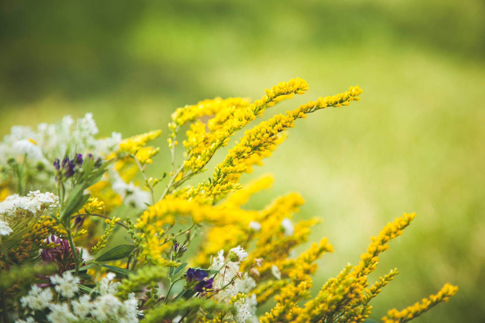 WildflowersPart2-sm-0547.jpg