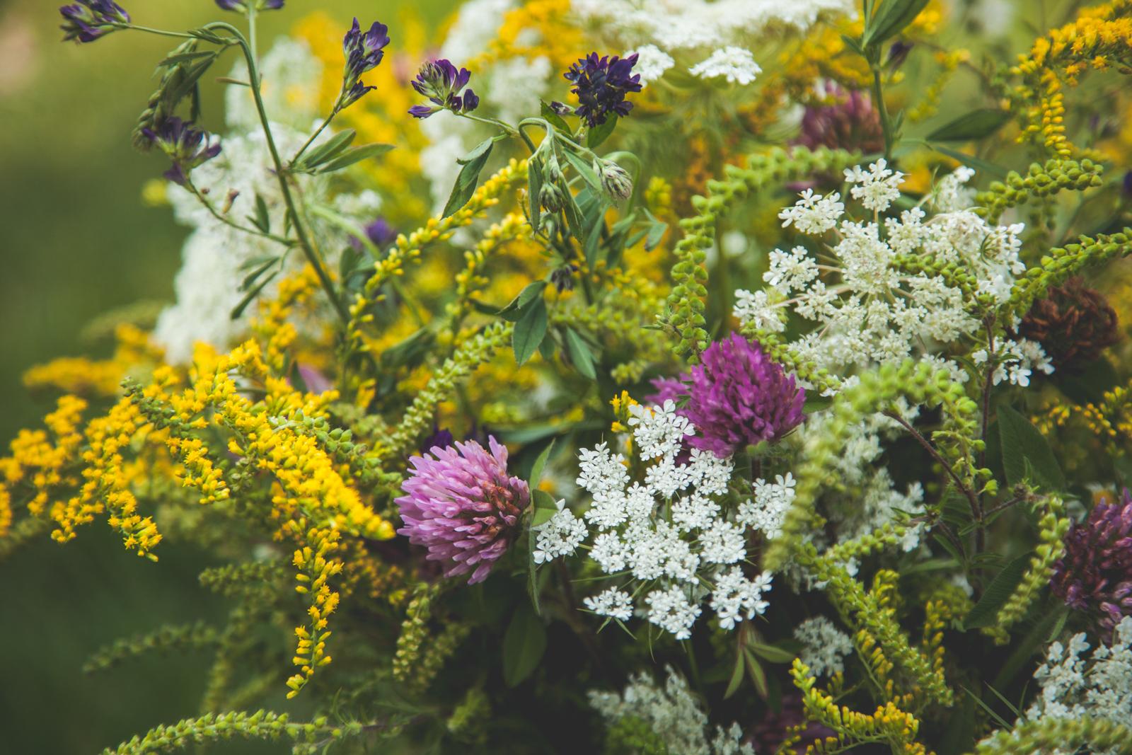 WildflowersPart2-sm-0548.jpg