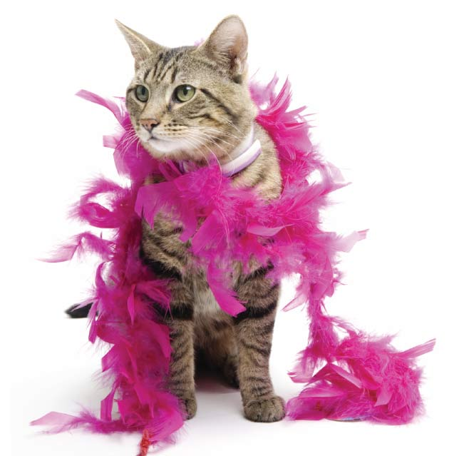 Burlesque - Burlesque Prop - $175 Includes 60 minutes of Burlesque dance choreography, prop use (feather boa, gloves, etc.) - Sparkling drinks and decorations. -Up to 8 guests