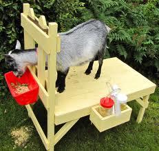 8893e-goat2.jpg